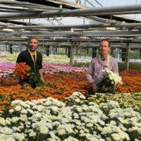 Ognissanti: 3,5 milioni di crisantemi per la festa dei morti,settore riparte dopo pandemia