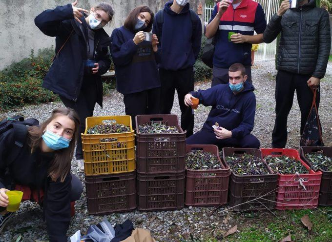 Caritas cerca terreni per la raccolta solidale negli oliveti: