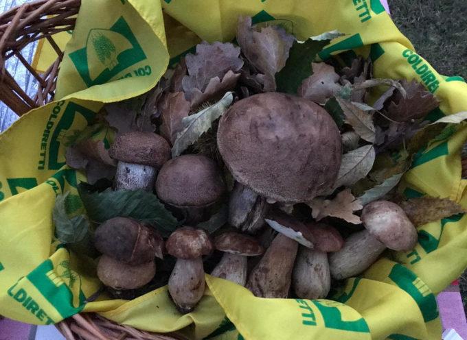 Garfagnana: ricerca funghi può essere fatale, il decalogo per una raccolta in sicurezza