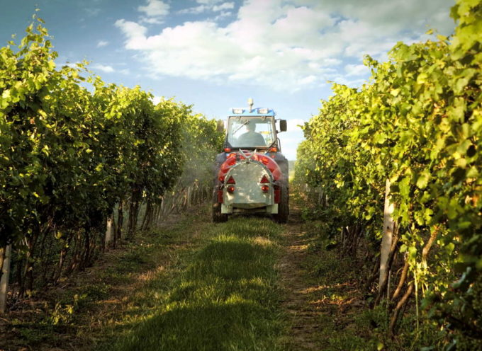 L'uva italiana è piena di pesticidi, l'ennesima conferma